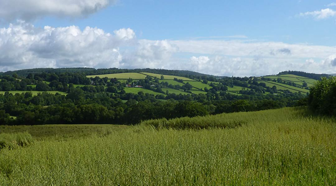 View from Coryton House